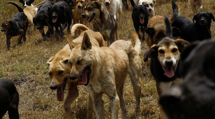 Mơ thấy đàn chó đuổi cắn