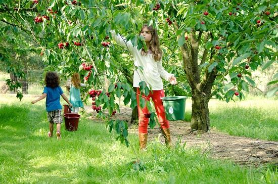 Mơ thấy hái quả trên cây