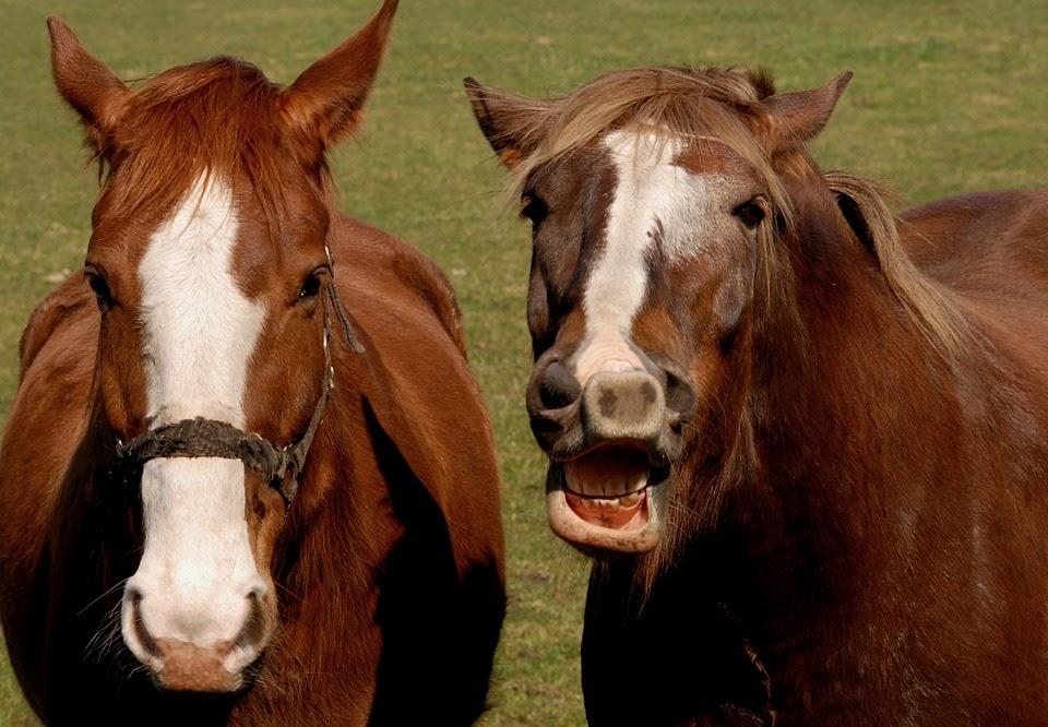 Mơ thấy 2 con ngựa là điềm báo gì?