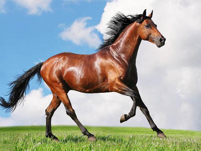 Nằm mơ thấy ngựa nên đánh con gì?
