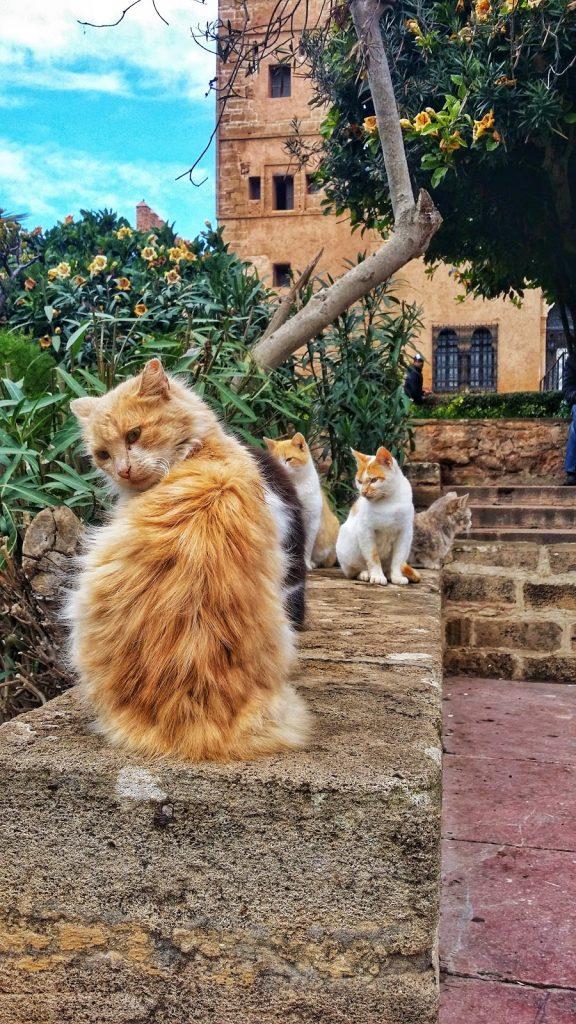 Mơ thấy ôm mèo vàng