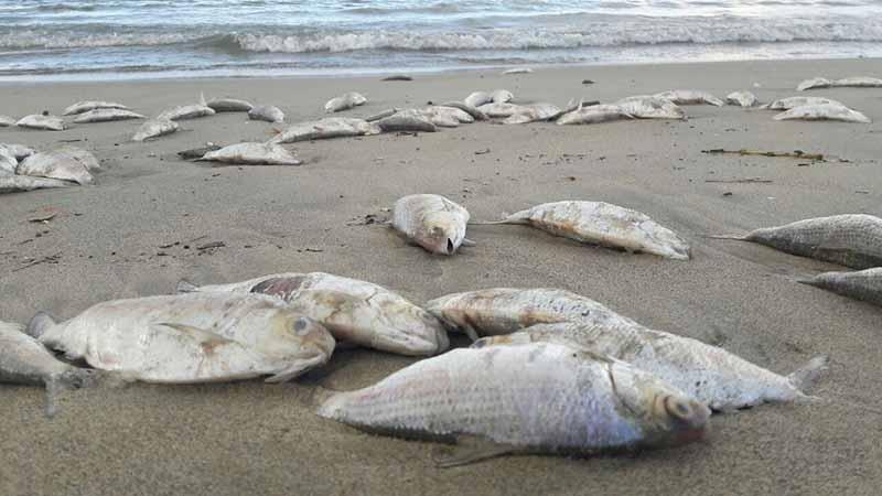 Nằm mơ thấy cá chết có ý nghĩa gì?