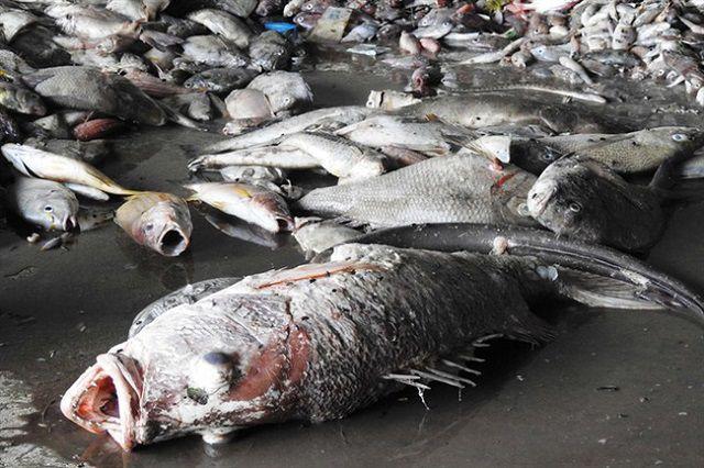 Nằm mơ thấy cá rô phi chết là dấu hiệu của điều gì?